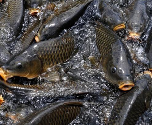 鲤鱼乡蛇攻人受图