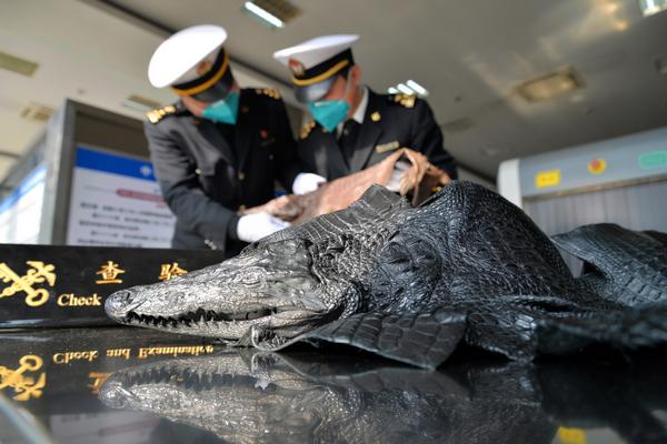 南京海关查获国家一级保护动物暹罗鳄整皮(附图)