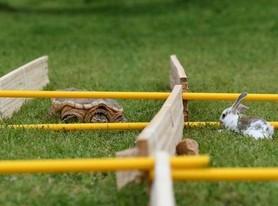 龟兔赛跑现实版:兔子没睡觉还是赢不了