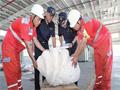 香港海關檢獲57只疑似瀕危物種活龜